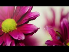 Instrumental Music | Wonderful Piano | ChillOut | 4 Hours | Musica para Relaxar - YouTube