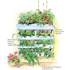 Vertical Pallet Garden Plan - Gardening - Mother Earth Living
