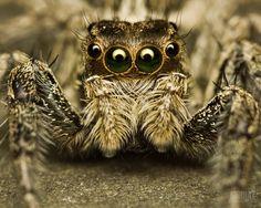 ¿Sufres de aracnofobia? Estos consejos te ayudarán a alejar a las arañas de tu hogar. Las arañas, protagonistas de películas, libros y fobias (y también unas de las criaturas más sofisticadas y bellas del mundo), las vemos en todos lados de nuestro hogar. A veces sabemos cómo reaccionar ante su presencia; en otras, simplemente entramos en estado casi catártico. Consejos para alejarlas de tu hogar.