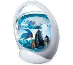 Découvrez ce superbe aquarium Betta Ring. Il convient pour les combattants ! http://www.animaleco.com/catalogue/aquariophilie/aquarium/aquarium-deco/tetra-betta-ring-1-8-litre