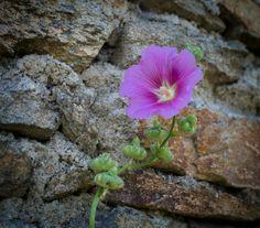 Liseron © Sabine Coe #Morbihan #tourisme #Bretagne Brittany, France, Plants, Sweet Life, Tourism, Plant, Bretagne, Planets, French