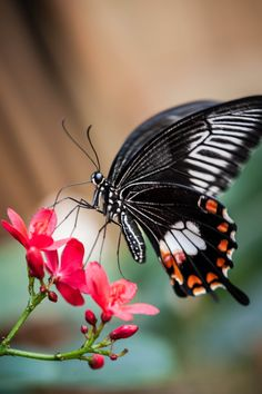 ~~Butterfly by Justin Lo~~