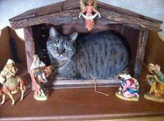 """This is my Jesus cat"""