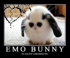 Funny Laugh, Haha Funny, Cute Memes, Funny Memes, Arte Cyberpunk, Rawr Xd, Fb Memes, Oui Oui, Stupid Memes