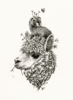 Brimss Sweet And Sour Wonderland Juxtapoz Com - Courtney Brims Intricate Pencil Drawings Depict A Sweet And Sour Wonderland That Often Focus On Concepts Of Reality Vs Myth And The Beauty And Brutality Of The Natural World Courtney Grew Up In Animal Sketches, Animal Drawings, Pencil Drawings, Art Drawings, Alpaca Drawing, Llama Arts, 1 Tattoo, Desenho Tattoo, Inca