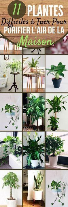 Je m'intéresse de plus en plus aux plantes d'intérieur. Elles ne servent pas seulement à rendre notre intérieur plus joli ! Elles améliorent aussi la qualité de l'air. Les plantes augmentent la quantité d'oxygène dans l'air grâce à la photosynthèse, mais elles peuvent également filtrer et purifier l'air. Des études montrent qu'elles peuvent aussi éliminer les toxines de l'air. #astuces #trucs #plantes #plantesvertes #trucsetastuces #air #purifier #maison #interieur