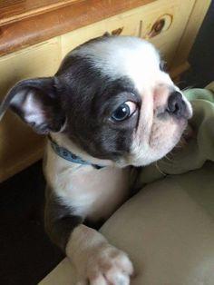 Baby Walter.