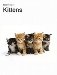 Kittens - Tess Donelon   Pets  578107415: Kittens - Tess Donelon   Pets  578107415 #Pets