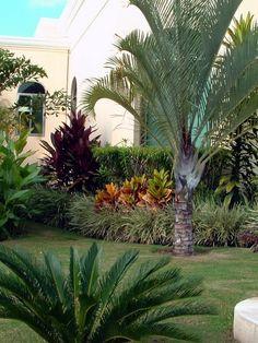 structured tropical garden