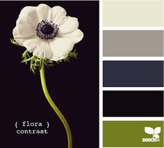 flora contrast, by design seeds Colour Schemes, Color Patterns, Color Combinations, Colour Palettes, Paint Palettes, Design Seeds, Color Concept, Color Palate, Color Swatches