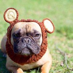 ... the face you make when you realize that tomorrow is monday  : @ruby_and_emma_ •  .  #pug #dogsofinstagram #puglovers #pugsofinstagram #frenchie #pawsome #flatnosedogsociety #obsessedwithpugs #grizzlybearzoosnood #flatnosedogsociety #dogsofinstaworld #ootd #zoosnoods #monday #mondayface #dogfashion #dogfashionista #dogsnood #dogcosplay #doghat #dogsinhats #dogcostume #dogsinclothes #fashiondog #dogapparel #dogclothes #doggifts