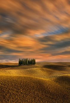 Cypresses.... by Krzysztof Browko (Tuscany, Italy)