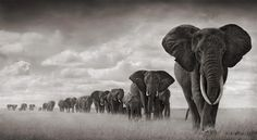 nick-brandt-elephants