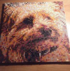 Yorkshire Terrier Hama Beads by piazobel on DeviantArt