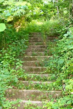 Stone stairs overgrown with lush foliage in Eureka Springs, Arkansas. Photo by Amy Laurel Hegy  @taleoftwotramps