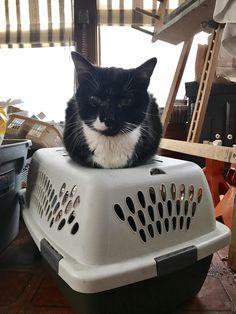 Jackson...back from the vet loaf