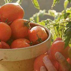 tips on growing perfect organic heirloom tomatoes