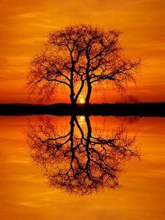 #orange #color #colo
