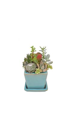 Succulent Mix in a Square Turquiose Ceramic Planter by Window27