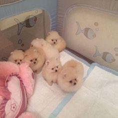 Cuddle up! @zoo_room_1