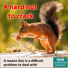 A hard nut to crack #learnengish #expression