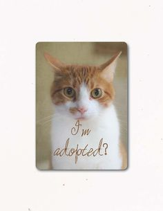 This truly makes me laugh. Greeting Card, CURIOUS CAT Eco, Handmade, Farm Fresh Photography via Etsy.