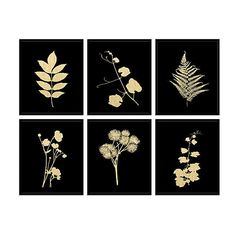 Plant Study II - Black/Gold Original Vintage Prints (€615) ❤ liked on Polyvore featuring home, home decor, wall art, modern home accessories, modern wall art, floral wall art, floral home decor and modern home decor