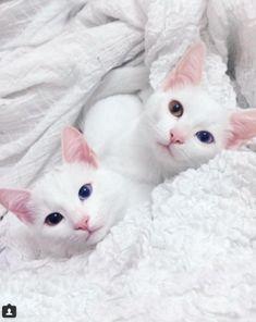 gatos5
