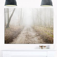Phase1 Straight Forest Road in Fall - Landscape Photo Glossy Metal Wall Art