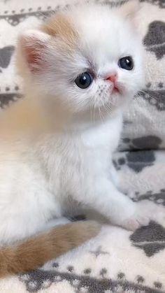 Cute Baby Cats, Cute Cats And Kittens, Kittens Cutest, Cute Dogs, Super Cute Animals, Cute Little Animals, Cute Funny Animals, Beautiful Cats, Animals Beautiful