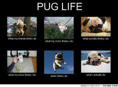 pug meme | PUG LIFE... - Meme Generator What i do