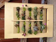 Vertical garden - repurposed house window shutter used to create a succulent garden.