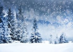 Winter Snow Covered Fir Tree Photography Backdrop, No Winkle Seamless Collapsible Reused Photo Background, buy discount Christmas backdrops. Winter Forest, Winter Szenen, Snowy Forest, Snowy Trees, Winter Trees, Snow Covered Trees, Winter Magic, Winter Night, Winter Season