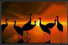 תוצאת תמונה עבור silhouette in africa