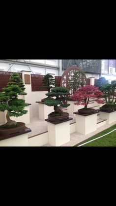 RHS Chelsea flower show 2016