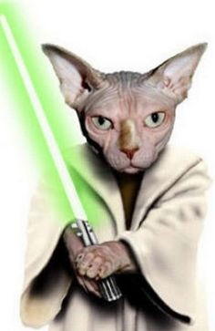 May the Sphynx be with you. Costume Chat, Cat Costumes, Yoda Cat, Cats Best, Funny Animals, Cute Animals, Sphynx Cat, Here Kitty Kitty, Hamsters