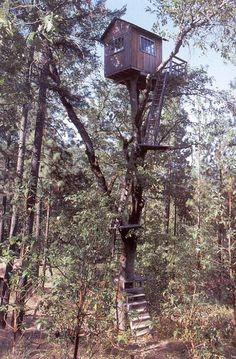 this one is so high love it !!! Tree house