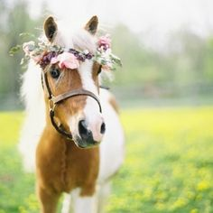 Be inspired by meadows, wild flower crowns and ponies... cute ponies {Image Credit - Kay English Photography}
