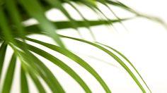 FLERIA. http://www.fleria.gr/