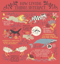 biology infographic Watch out zebra! Infographic from my new book The Wondrous Workings of Planet Earth preorder link in bio Science Art, Teaching Science, Life Science, Science And Nature, Science Geek, Computer Science, Earth Book, Environmental Science, Kids Learning
