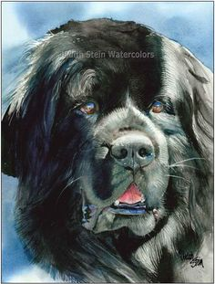 NEWFOUNDLAND Newfie 15x11 Giclee Watercolor Print by k9stein, $40.00
