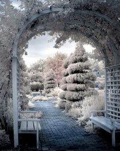 Winter beauty—sculpted trees & arbor dusted with snow❣