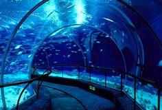 The Shanghai Ocean Aquarium in China features a 390ft underwater tunnel. Zippertravel.com Digital Edition