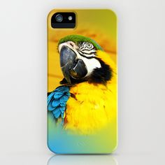 Exotic Blue and Yellow Macaw Parrot iPhone Case