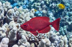 Red by Buzov #nature #photooftheday #amazing #picoftheday #sea #underwater