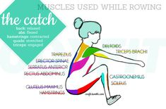 Muscles used while rowing: The Catch   #rowing   http://www.concept2.com/indoor-rowers/training/muscles-used#TheCatch