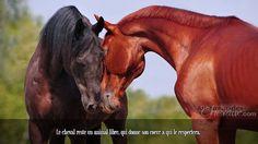 Le cheval reste un animal libre, qui donne son coeur a qui le respectera.