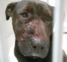 Beat up from dogs picking on him, then put in a shelter which kills dogs if they aren't adopted in a matter of days... :((