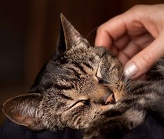 Do you know where your cat loves to be petted — and what spot to avoid? Dr. Marty Becker does. Here's what you need to know.