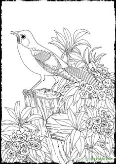 Advanced Coloring Pages For Adults